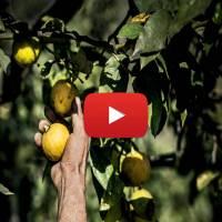 Calabria, il bergamotto raccontato da Christian Dior