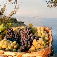 Il vino Cirò: Storia del vino più antico del mondo
